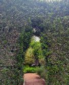 Viña Casas del Bosque